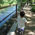 ゴールデンウィークに子どもと北の丸公園を散策する